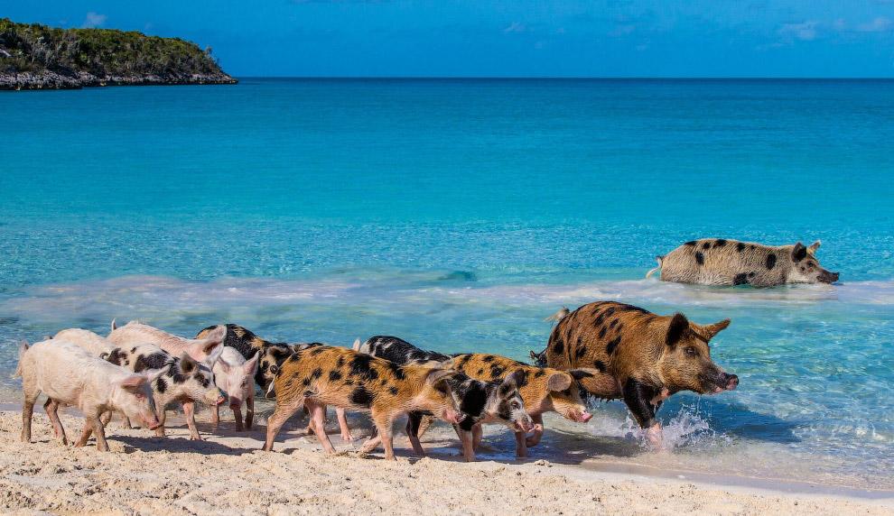 Eiland te koop voor 85.000.000 op de Bahamas 02