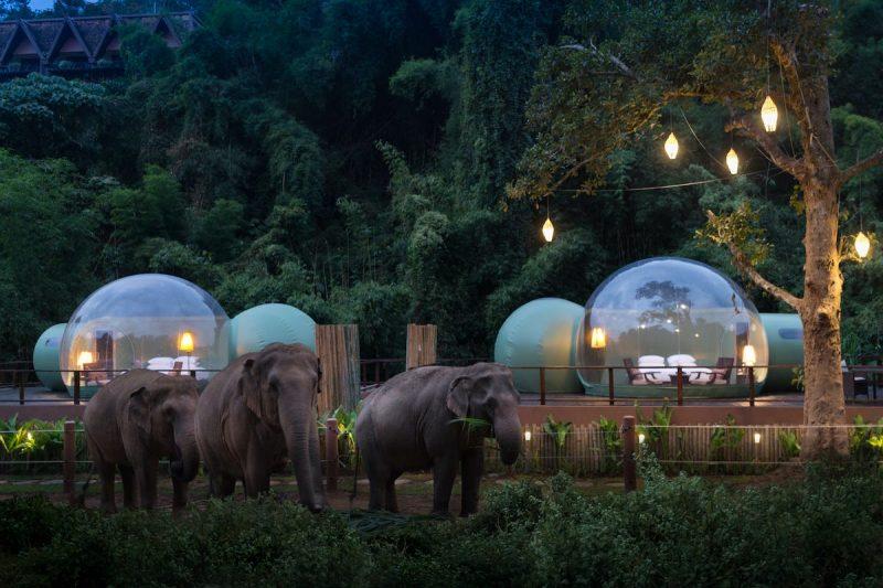 Je kunt nu in deze Jungle Bubble slapen in Thailand omringd door Olifanten1