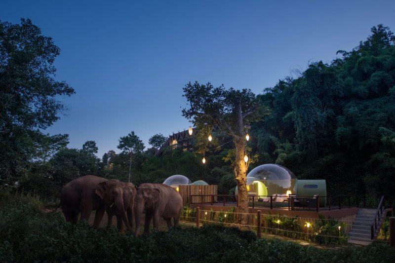 Je kunt nu in deze Jungle Bubble slapen in Thailand omringd door Olifanten2