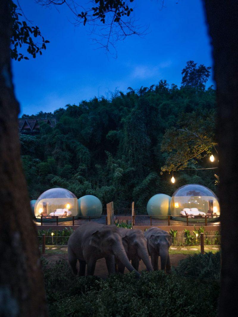 Je kunt nu in deze Jungle Bubble slapen in Thailand omringd door Olifanten3
