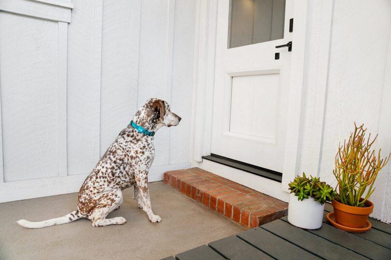 hondenluik, honden, deur