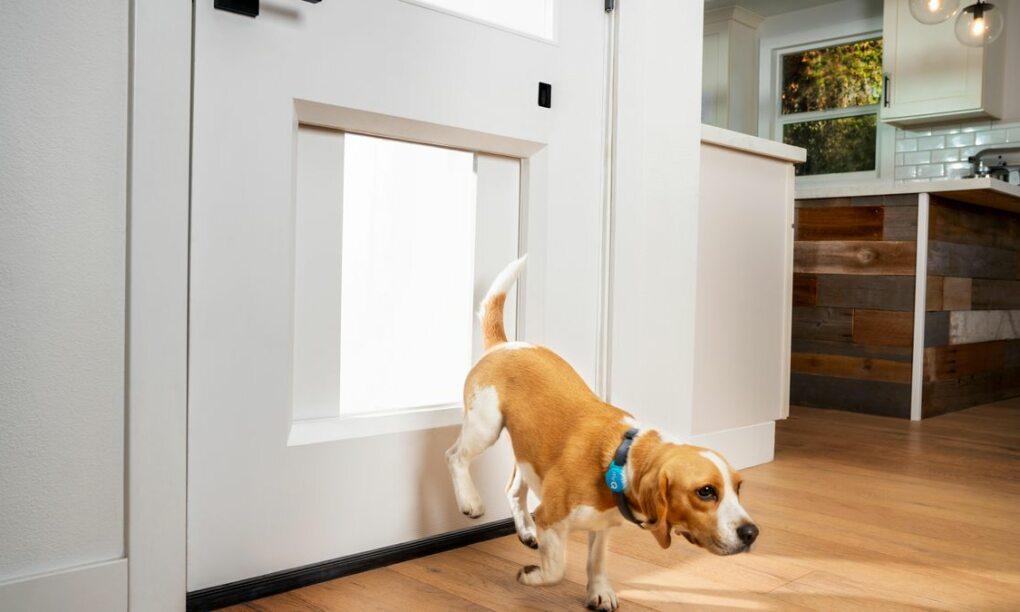 myq, hondenluik, hond, deur